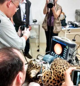 Endoscopia na veterinária
