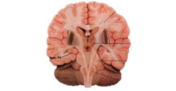 Indicações de uso do ultrassom na Neurocirurgia